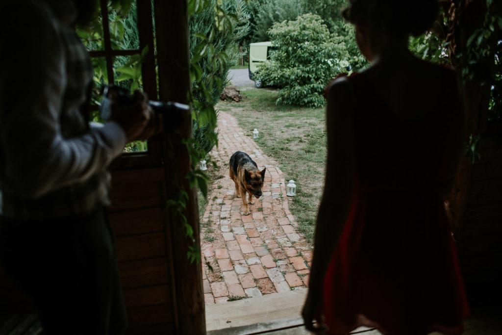 pies w dniu ślubu